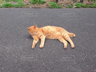 猫の写真・画像素材[235120]