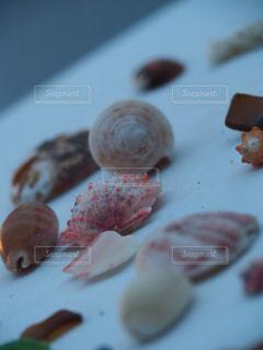 貝殻の写真・画像素材[235166]