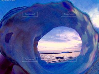 貝殻の写真・画像素材[235159]