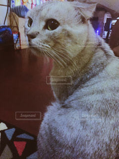 猫の写真・画像素材[235809]
