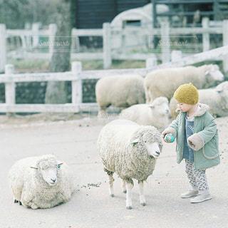 動物の写真・画像素材[7758]