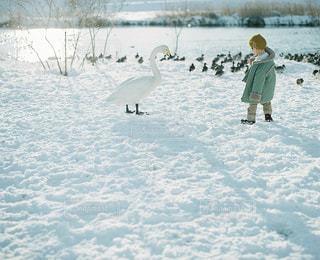 雪の写真・画像素材[7761]