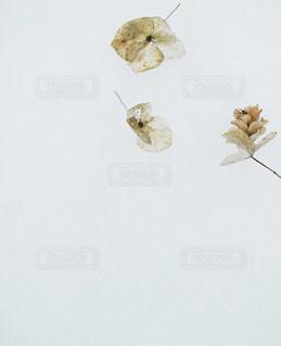 花の写真・画像素材[7763]