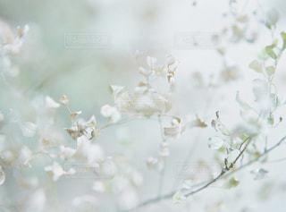 花の写真・画像素材[7768]