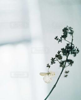 花の写真・画像素材[7773]