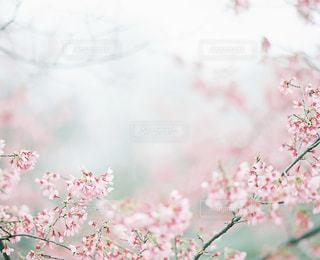 花の写真・画像素材[7781]