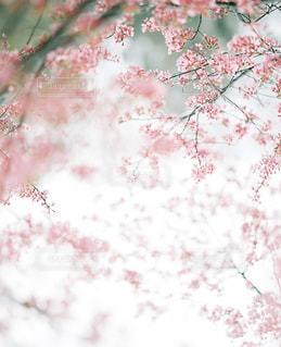 花の写真・画像素材[7782]