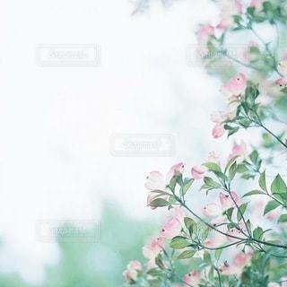 草の写真・画像素材[7785]