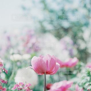 花の写真・画像素材[7786]
