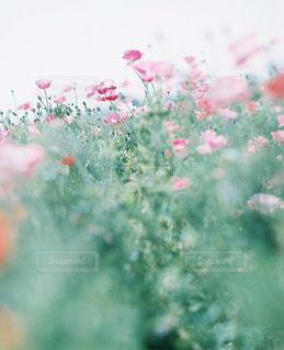 花の写真・画像素材[7804]
