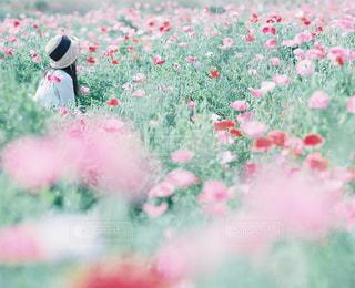 草の写真・画像素材[7806]
