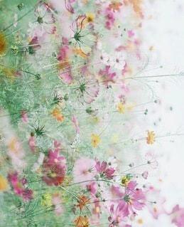 花畑の写真・画像素材[7832]