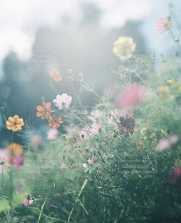 自然の写真・画像素材[7835]