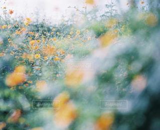 自然の写真・画像素材[7836]