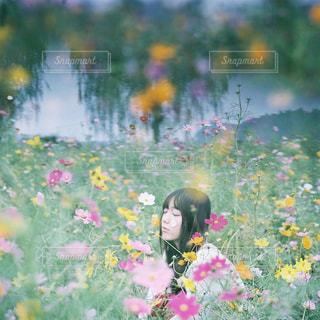 花の写真・画像素材[7838]