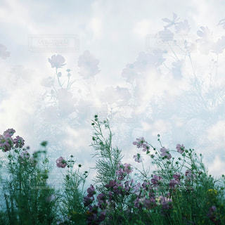 自然の写真・画像素材[7839]