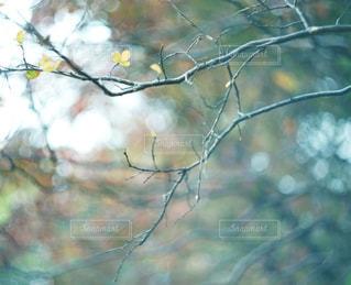 屋外の写真・画像素材[7857]