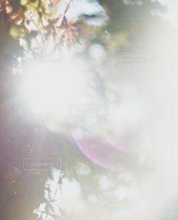 ぼやけるの写真・画像素材[7859]