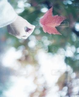 花の写真・画像素材[7862]