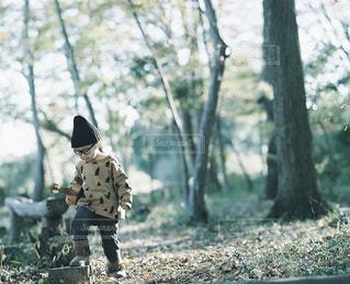 森林の写真・画像素材[7868]