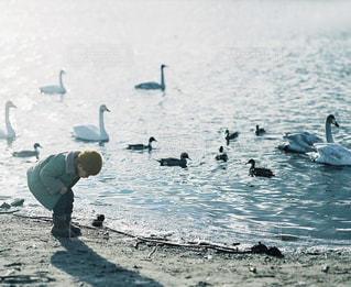 子どもの写真・画像素材[7875]