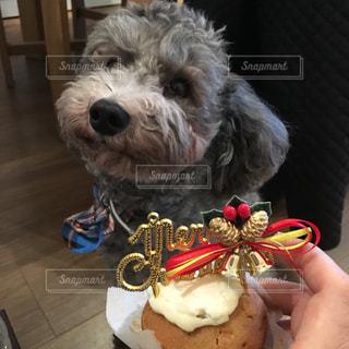 犬の写真・画像素材[235953]