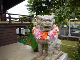 ハワイ出雲大社の狛犬の写真・画像素材[875830]