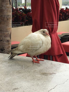 鳥の写真・画像素材[236599]