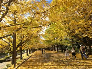 秋の写真・画像素材[236236]