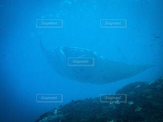 海の写真・画像素材[236669]