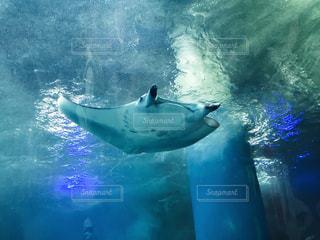 水族館の写真・画像素材[237529]