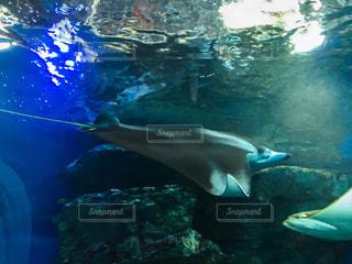 水族館の写真・画像素材[237531]