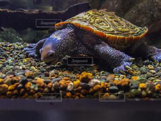 水族館の写真・画像素材[237536]