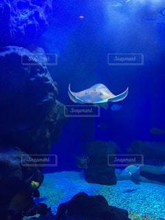 水族館の写真・画像素材[237545]