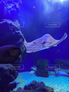 水族館の写真・画像素材[237547]