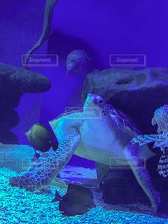 水族館の写真・画像素材[237548]