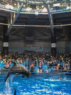 イルカの写真・画像素材[237557]