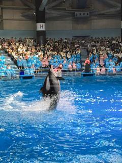 イルカ,プール,水族館,イベント,イルカショー,ショー,水上,観客,客席,海豚,水上歩行,立ち泳ぎ,歩行
