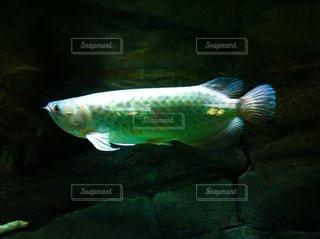 魚の写真・画像素材[238810]