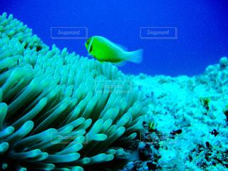 海の写真・画像素材[240751]