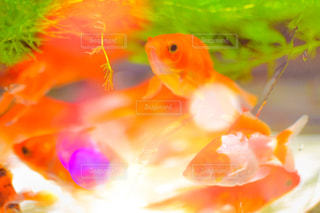 魚 - No.236841