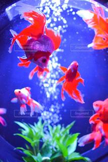 魚の写真・画像素材[236842]