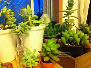 No.237272 植物