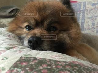 犬 - No.236916
