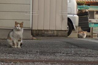 猫の写真・画像素材[236966]