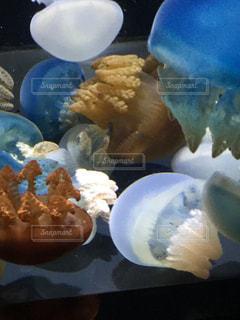 海の写真・画像素材[240216]