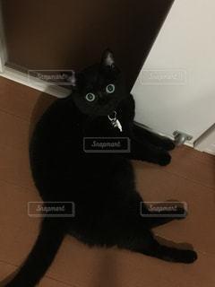 猫の写真・画像素材[243484]