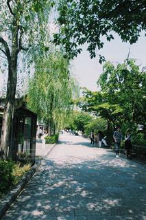 木 - No.494907