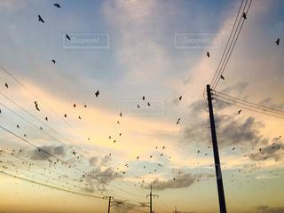 鳥 - No.237236