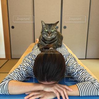 猫 - No.237382